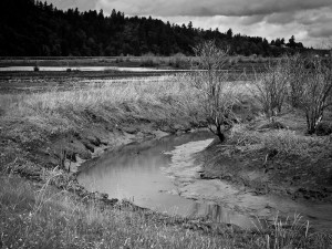 Nisqually Wildlife Refuge 07/16/2011